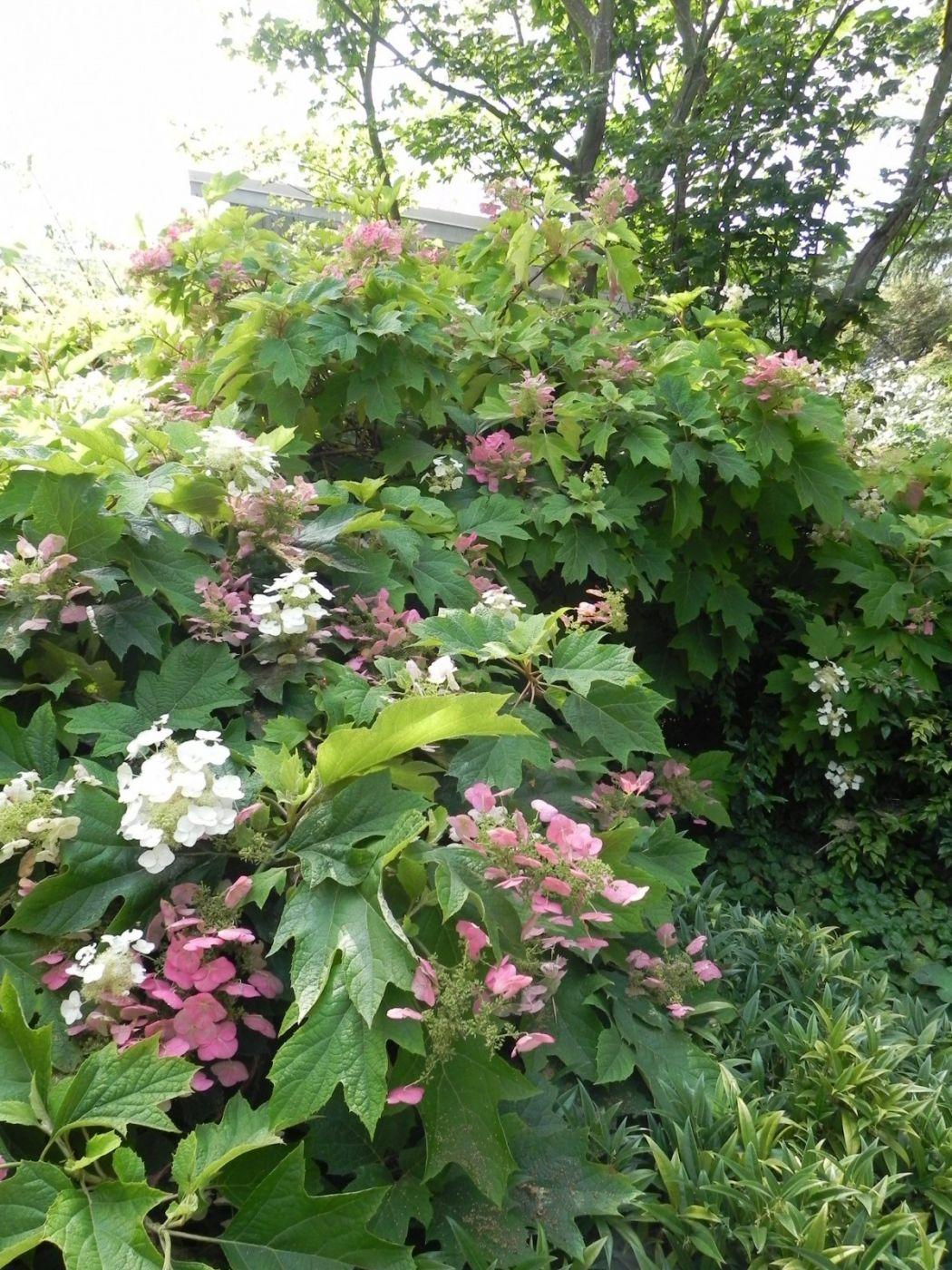100 Sublime Garden Design Rustic Wood Pergola Sublime