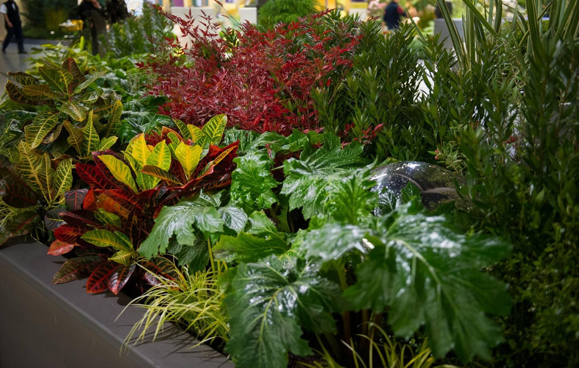 Northwest flower garden show 2013 living amongst the - Northwest flower and garden show ...