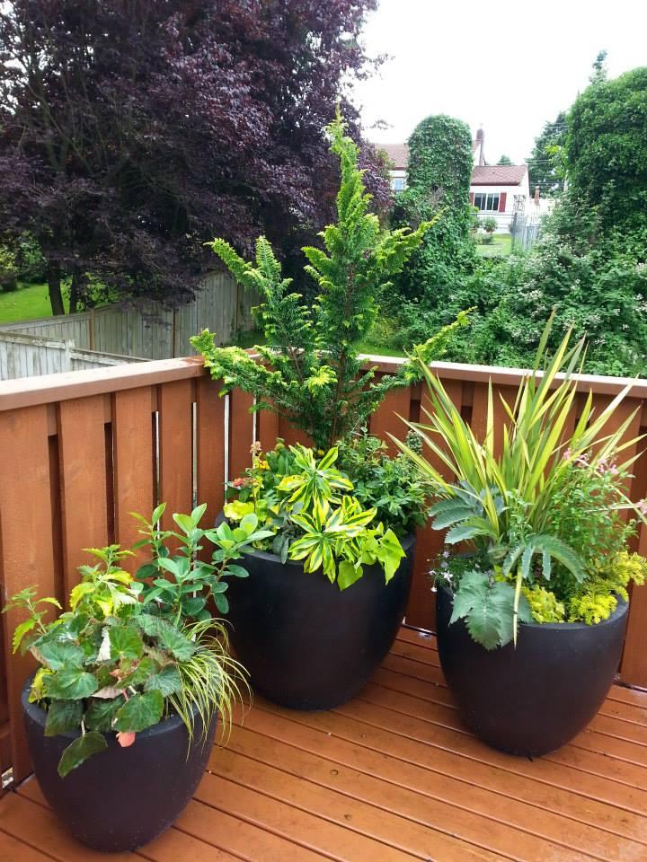 Comp Texture Sublime Garden Design Landscape Design