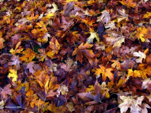 Fall leaves Image by Gary Richardson