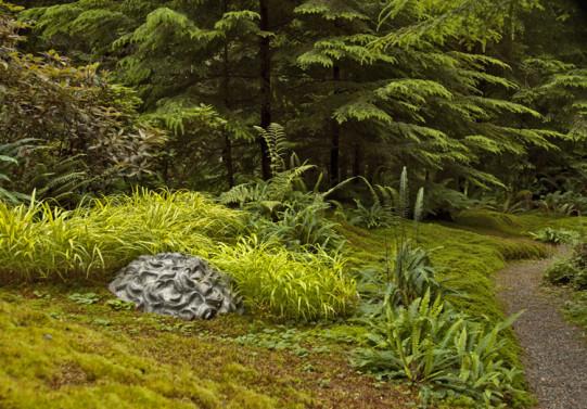 Japanese Moss Grass in Japanese Forest Grass