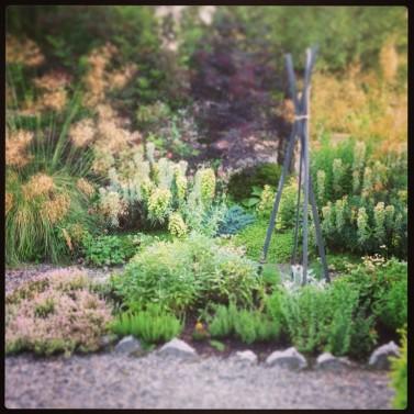 Herb Garden Photo: Monicoco