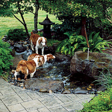 Dogscaping Part 2 Tips for Designing a Beautiful Dog-friendly Garden | Sublime Garden Design ...