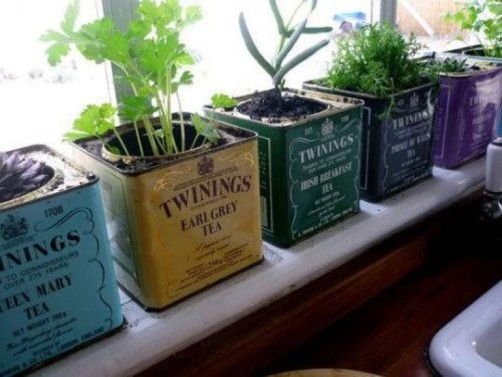 Windowsill herb garden using tea tins Photo credit: www.hardakerandpope.blogspot.co.uk