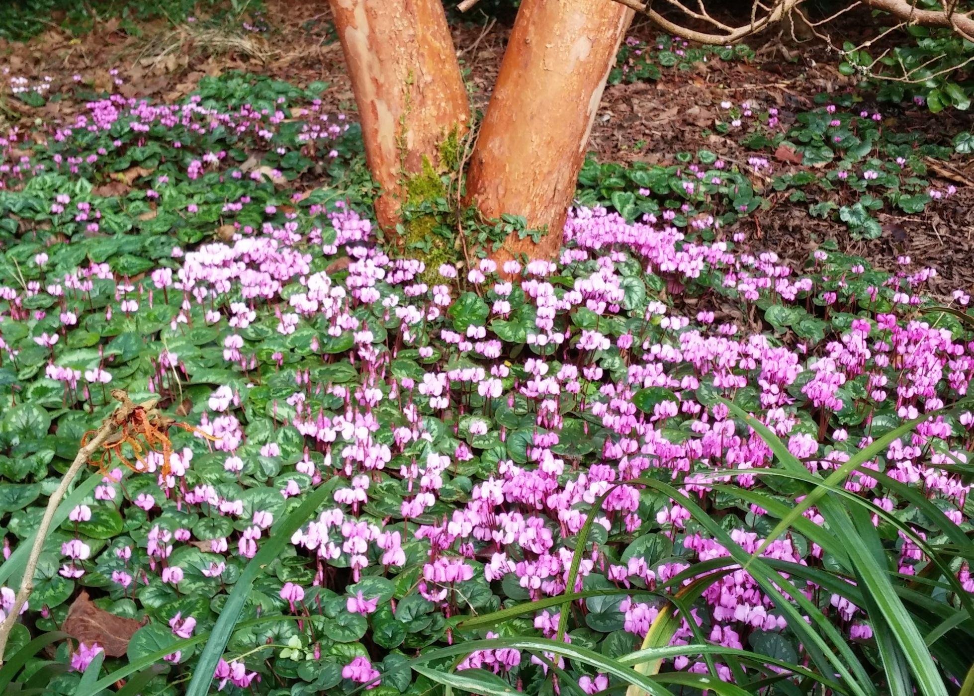 garden design for winter interest sublime garden design
