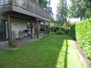 Edmonds backyard landscaping 'Before'