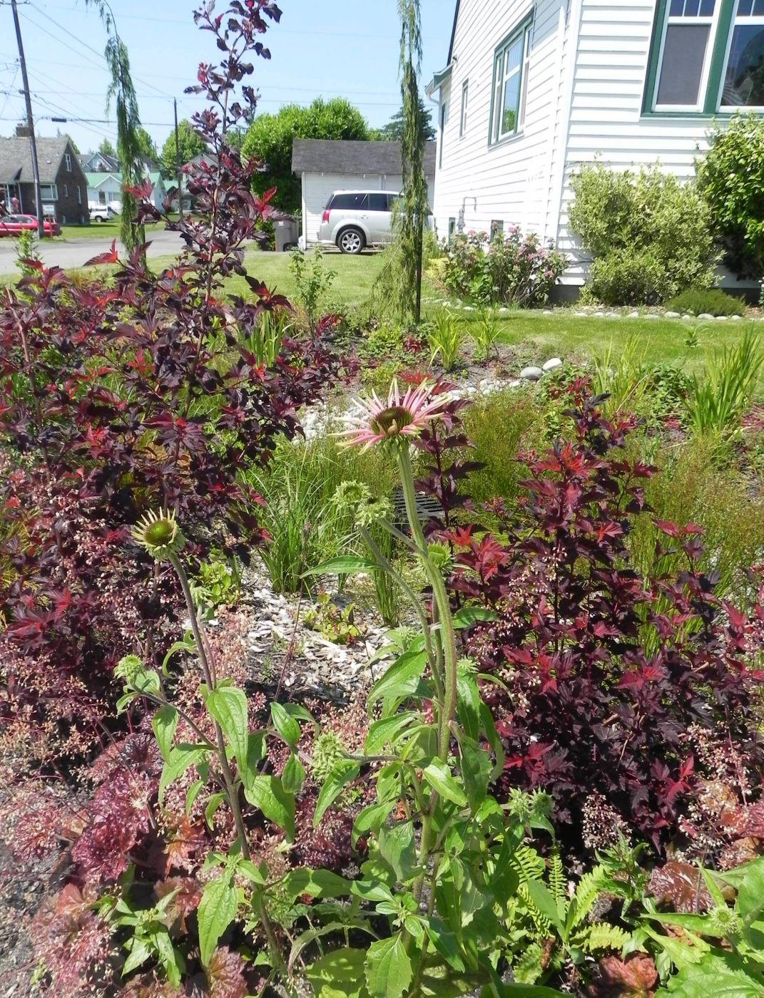 Everett Rain Garden Sublime Garden Design Landscape