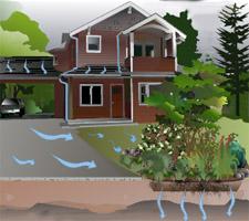 photo: Rain Garden Handbook for Western Washington - WSU Extension