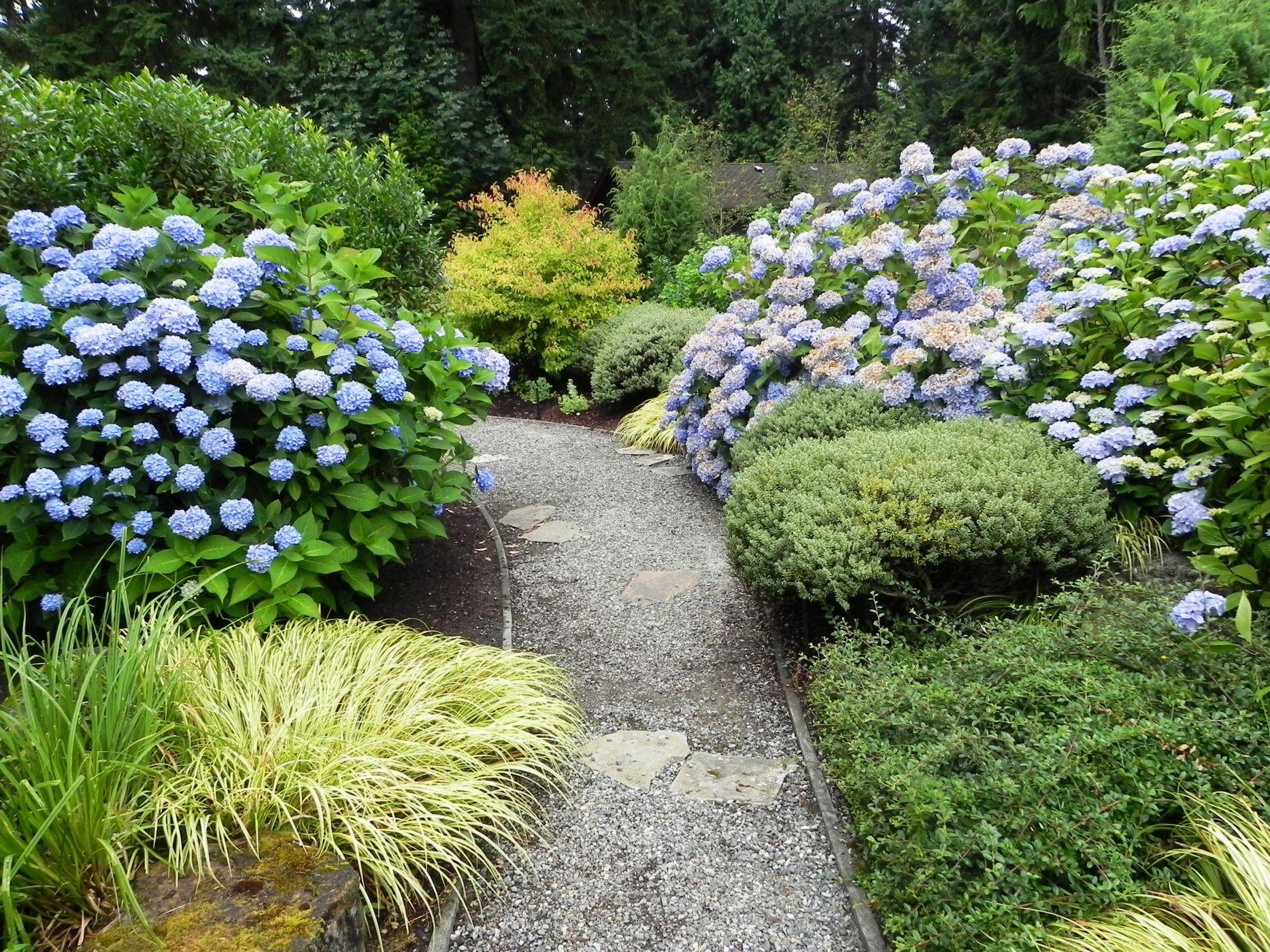 Hydrangea macrophylla sublime garden design landscape for Garden designs with hydrangeas