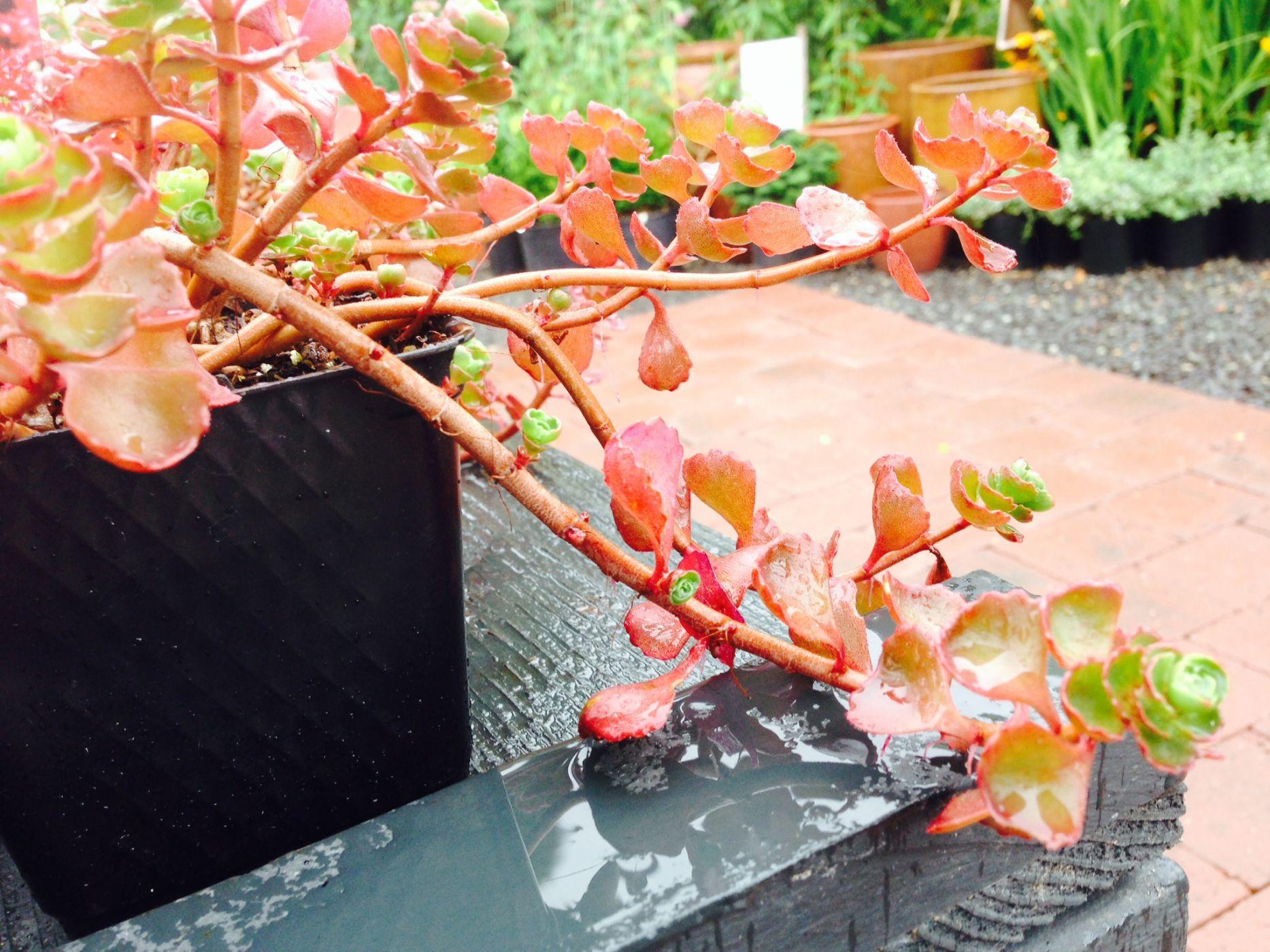 5 Drought Tolerant Plants In The Northwest Sublime Garden Design