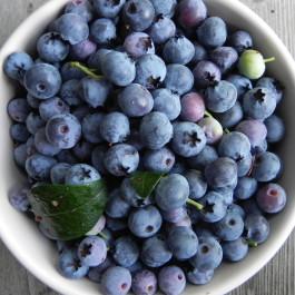 Blueberries_SublimeGardenDesign