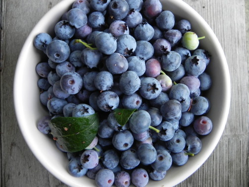 Fresh juicy blueberries from the garden - Sublime Garden Design