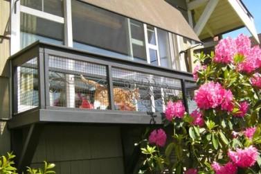 Cat window 2 450x300
