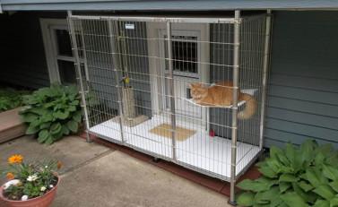 Catio small enclosure 640x392