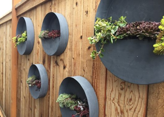 Edmonds Fence Planters by Sublime Garden Design