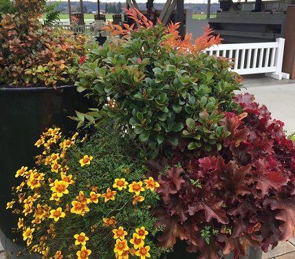 Snohomish Container Garden by Sublime Garden Design