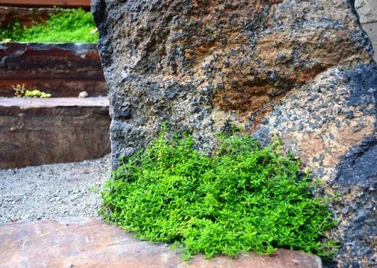Thyme energizes the senses - Sublime Garden Design