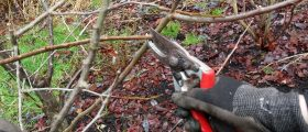 Selective thinning cut: cut the branch back to where it meets another branch. This is the best type of cut for most types of pruning.