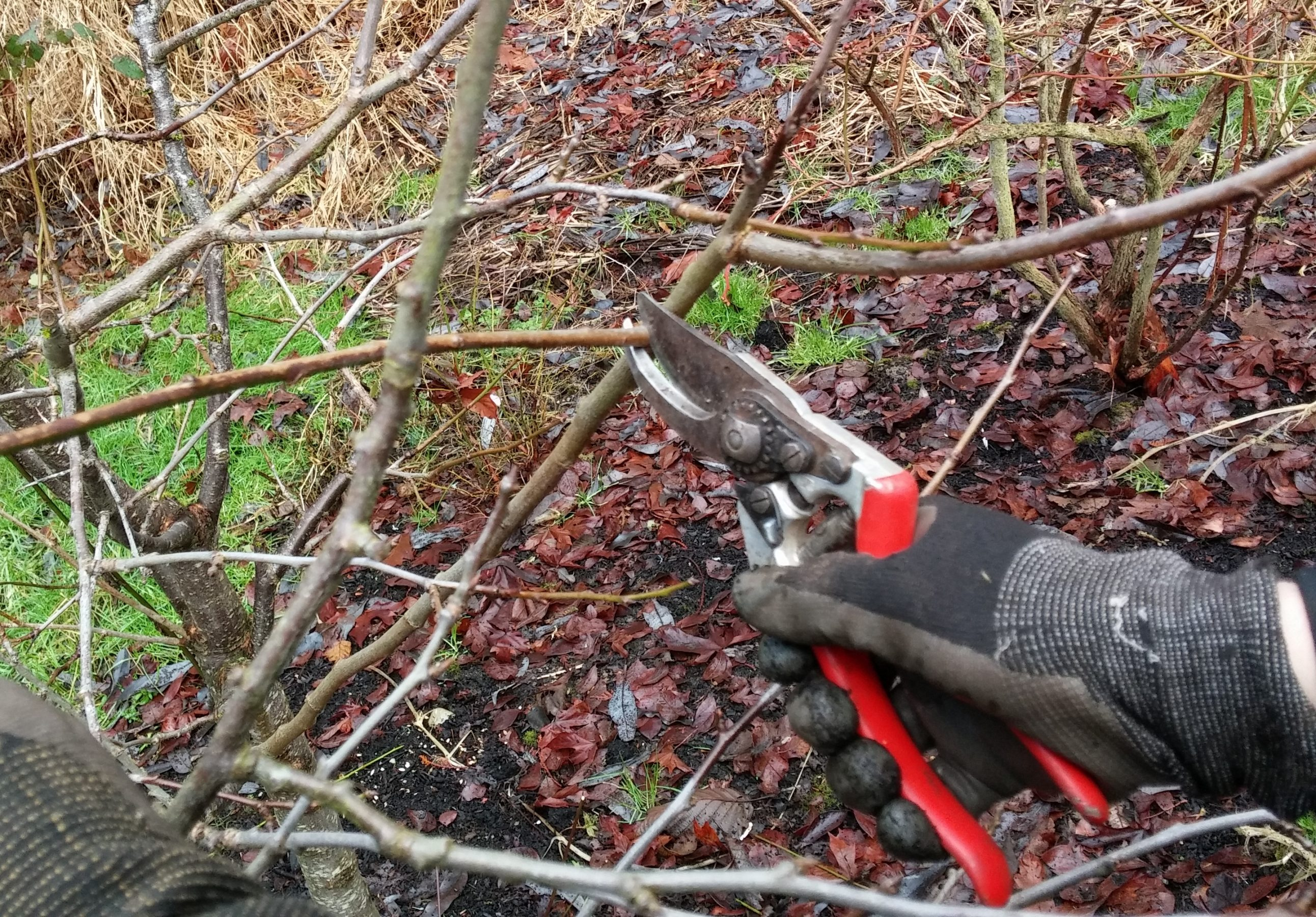 Pruning In Fall Sublime Garden Design Landscape Design