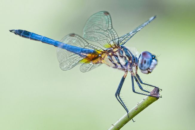 Dragonfly Photo Courtesy of Mother Nature Network
