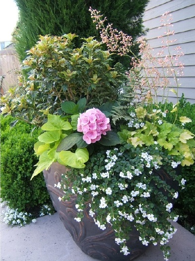 Four Season Interest Container Garden