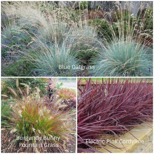 Drought Tolerant Grasses (Photos Courtesy of Verde River Growers and Monrovia)