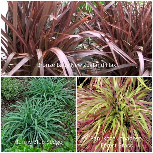 Coarse Textured Grasses (Photos Courtesy of Gardener's Dream and Northcreek Nurseries)
