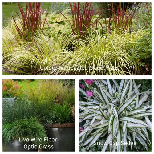 Container Grasses (Photos Courtesy of Monrovia, HGTV, and Bluestone Perennials)
