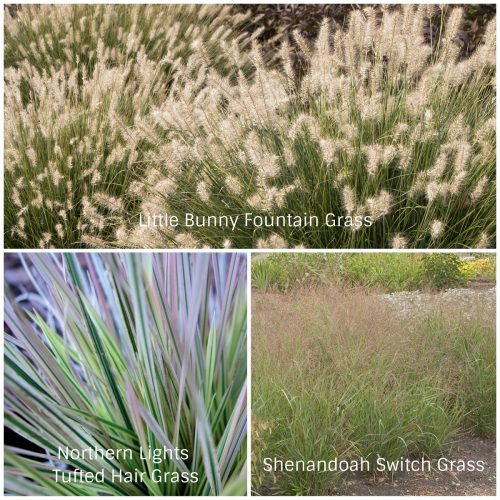 Small Space Grasses (Photos Courtesy of Monrovia)