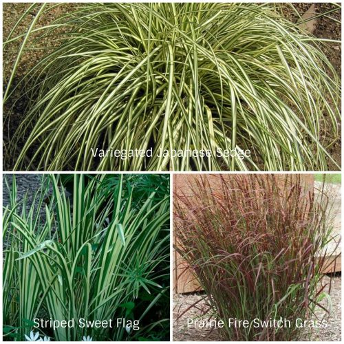Water Loving Grasses (Photos Courtesy of LeBeau Bamboo Nursery, Fine Gardening, and Missouri Botanic Garden)