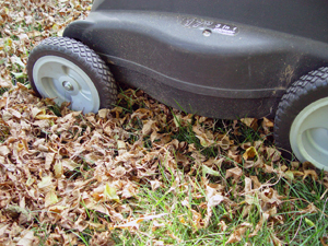 Mulch Mowing Leaves Photo Courtesy of Kansas State University