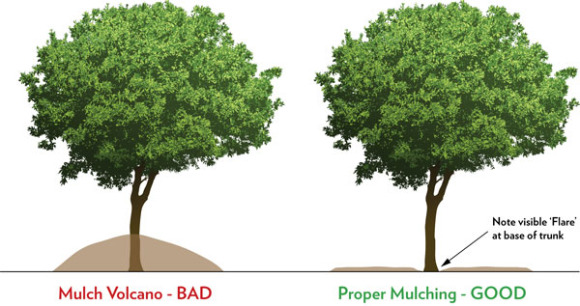 Mulching Bad and Good Photo Courtesy of Organic Plant Care LLC