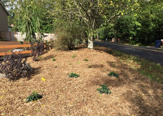 After Sheet Mulching