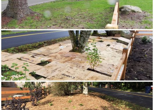 Before, During, and After Sheet Mulching