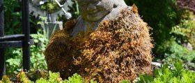 Moss Growing on Buddha