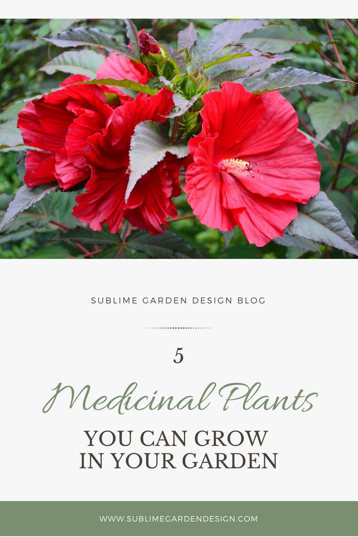 Medicinal Plants You Can Grow In Your Garden Sublime Garden Design