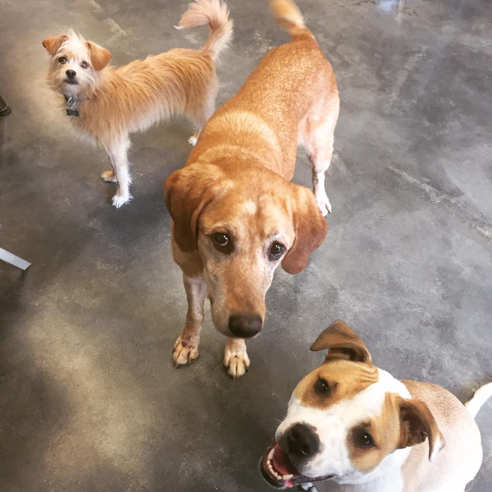 Ellie, Daisy, Zoey