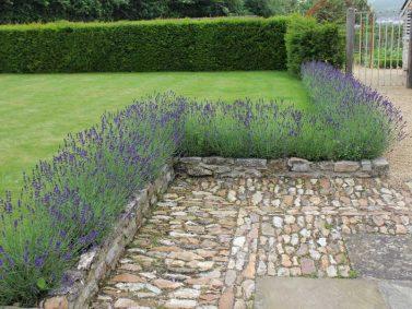 Lavender Hedge Photo Courtesy of POD Gardens